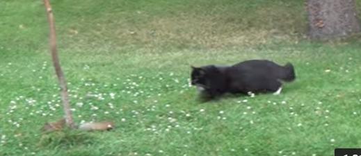 猫がリスを追っかける動画