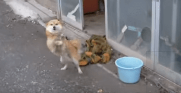 歓迎の仕方が露骨すぎる犬の動画
